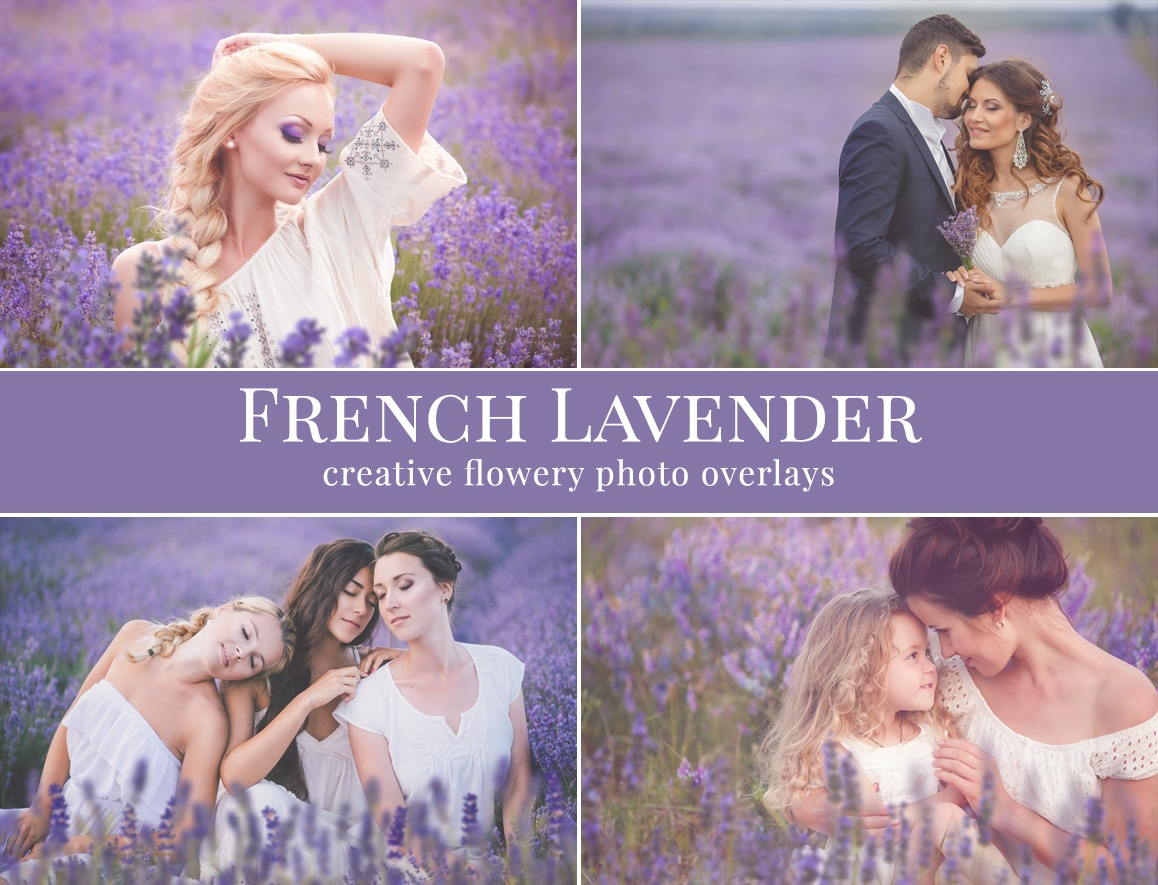french-lavender-preview