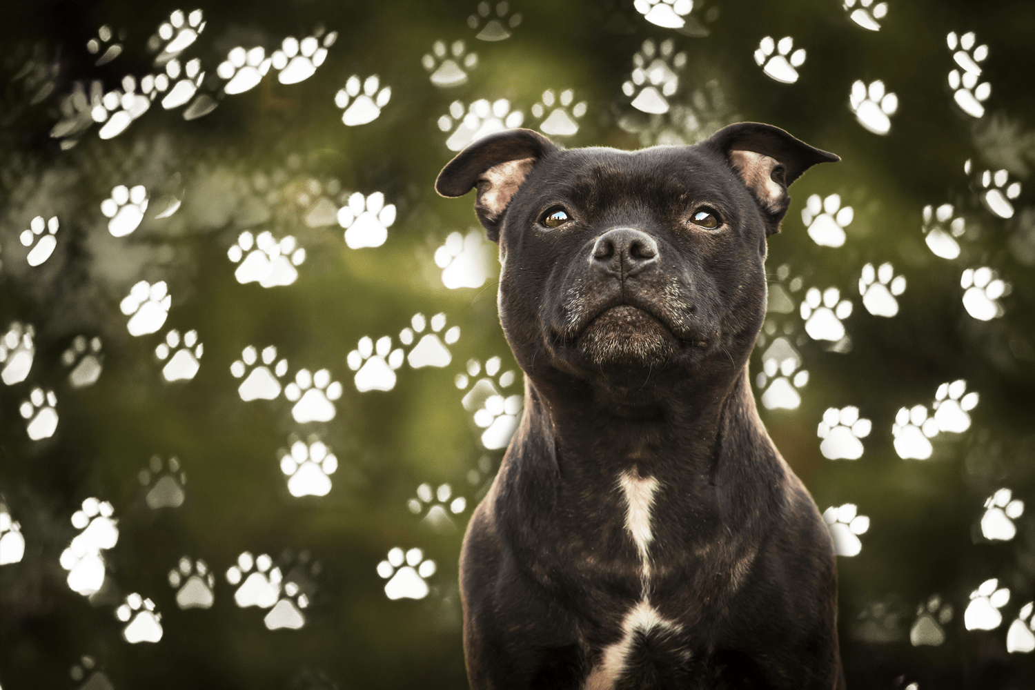 After-Dog Paws Bokeh photo overlays