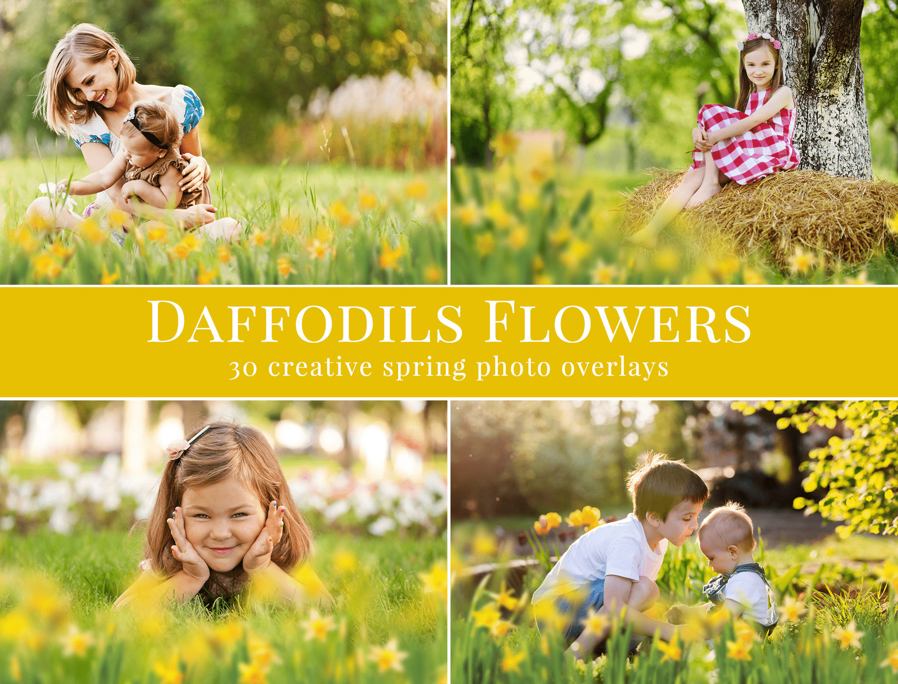 daffodils-flowers-photo-overlays