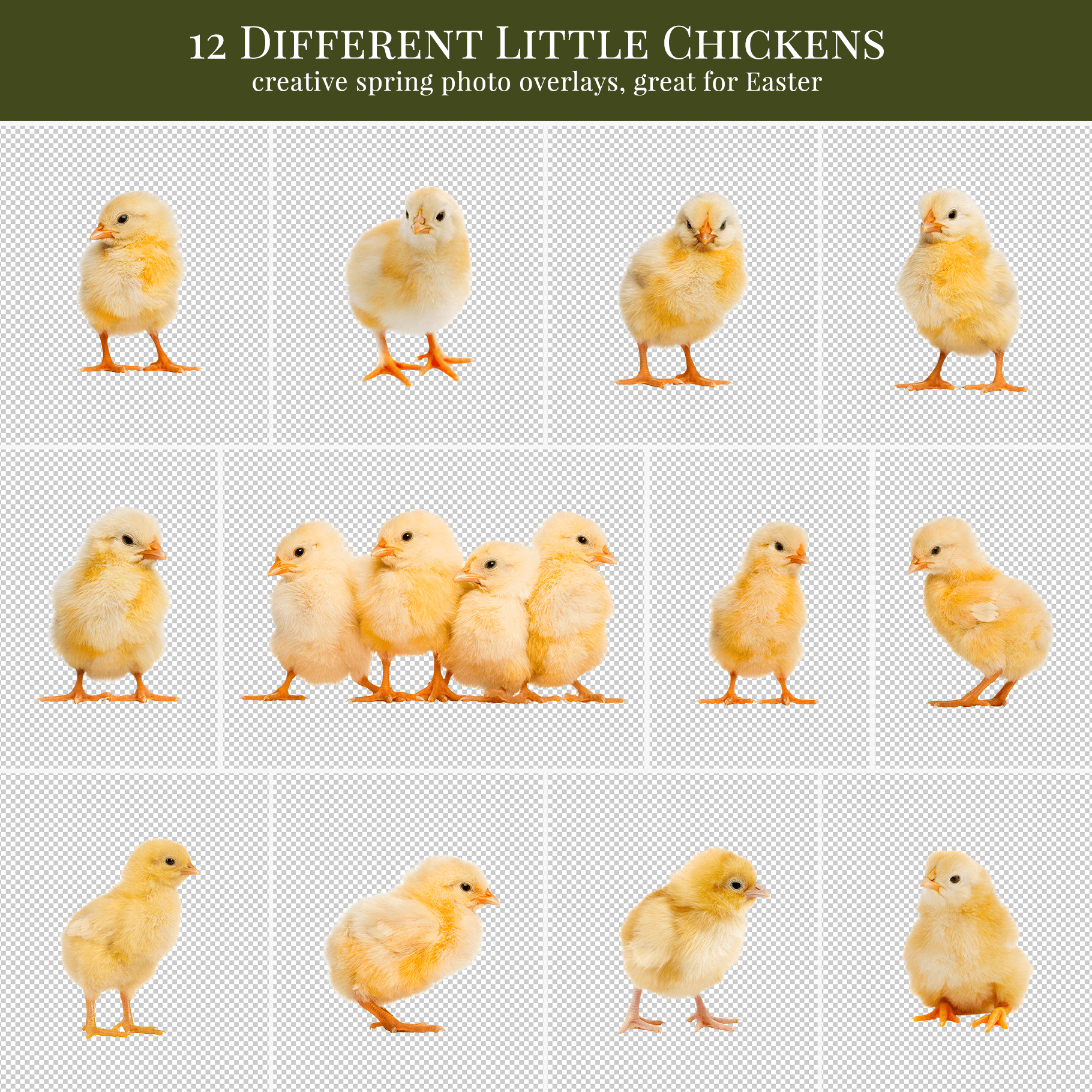 spring chickens overlays