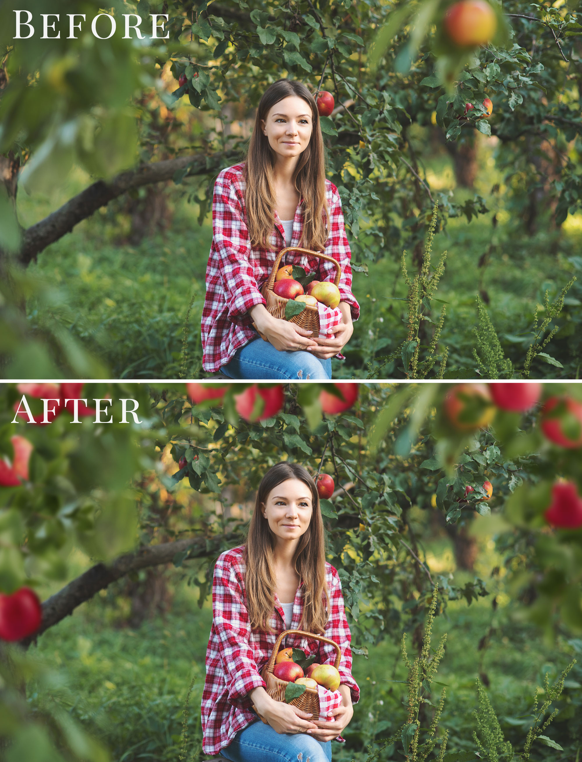 apple orchard photo overlays