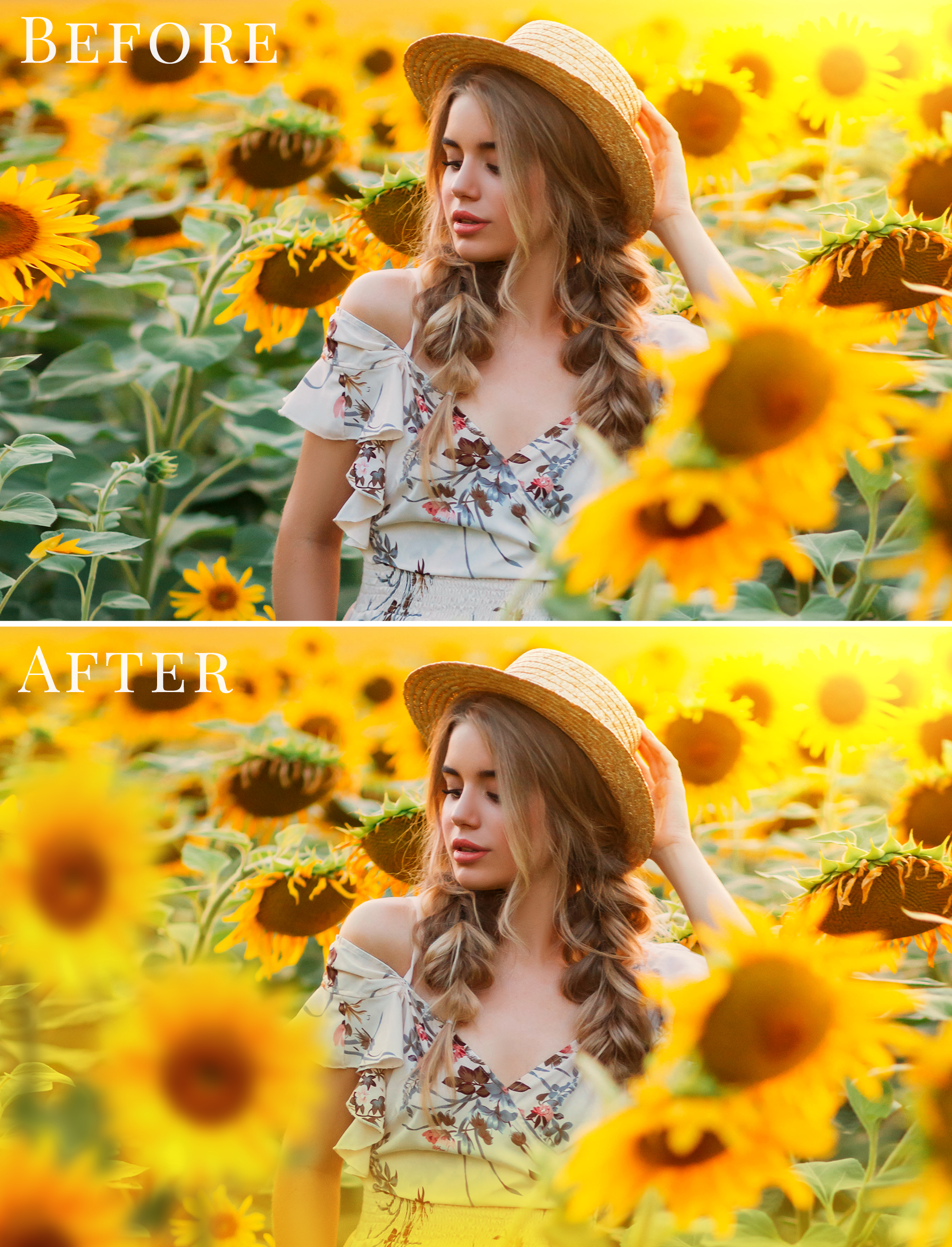 sunflower photo overlays